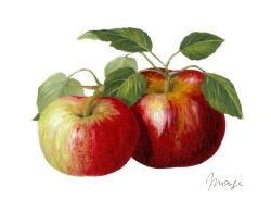 pomme site dorieux